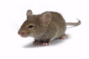Ako opraviť nefunkčnú myš k PC